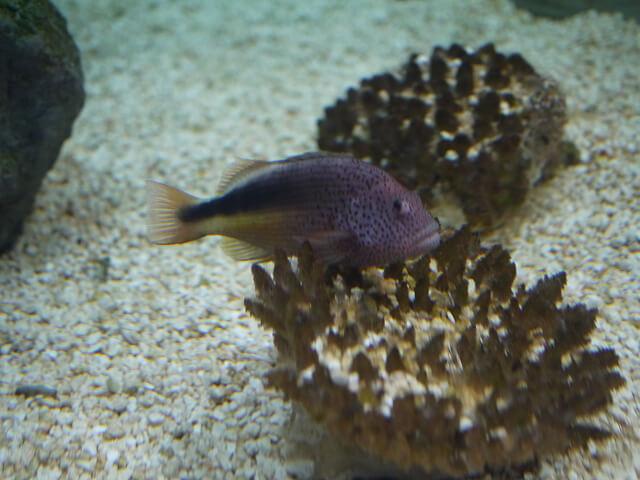 魚の写真画像