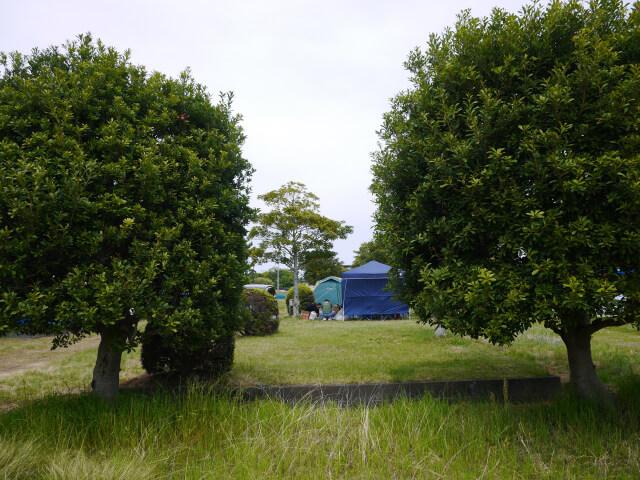 藤波キャンプ場 Cサイト画像