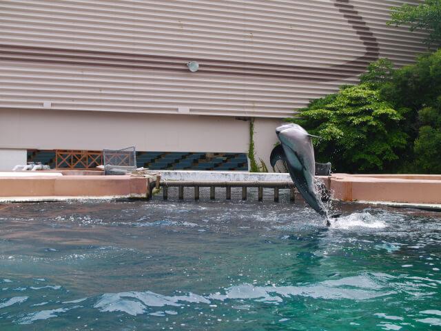アドベンチャーワールド イルカふれあいプール画像