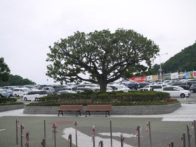 アドベンチャーワールド 駐車場画像