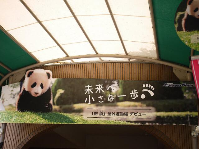 アドベンチャーワールド 親子パンダの看板画像
