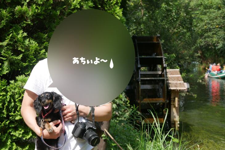 大王わさび農場内にある水車小屋で記念撮影を行うワンコ画像