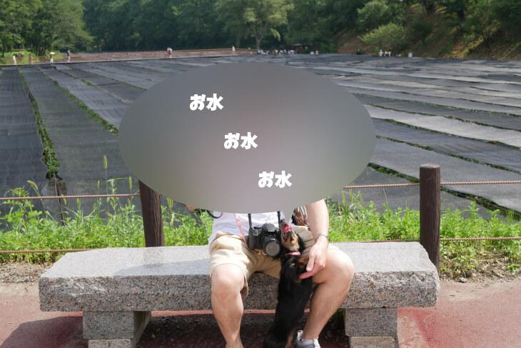 大王わさび農場でお水を欲しがるワンコ画像