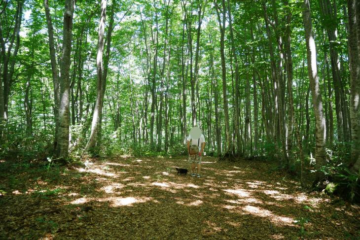 ブナ林のトレッキングコース画像