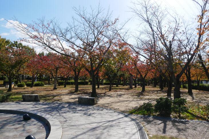 花園中央公園桜の広場画像
